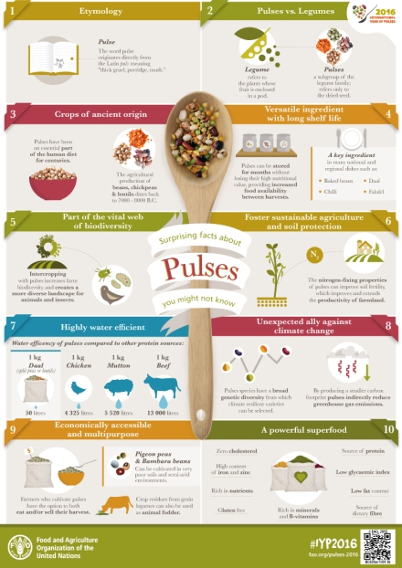 IYP-Pulses-Facts-infographic